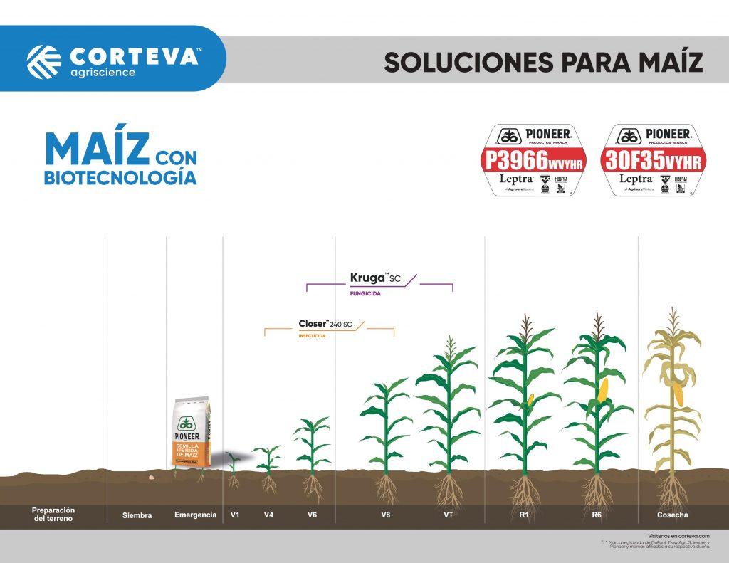 Productos de Corteva Agriscience para maíz con biotecnología