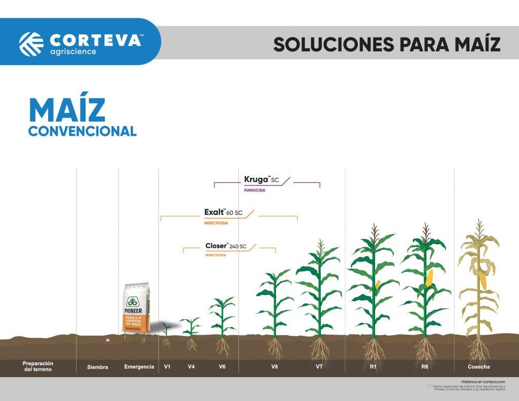 Productos de Corteva Agriscience para maíz convencional
